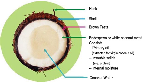 Simple Ways to Make Virgin Coconut Oil - wikiHow